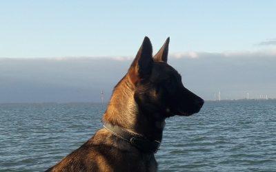 Elektronische halsband voor honden vanaf volgend jaar verboden